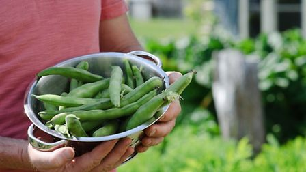 Start sowing broad beans now for a delicious crop later in the year