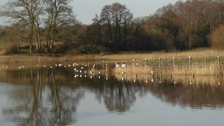 Testwood Lakes - photo by Peter Hutchings
