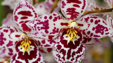 Join an orchid group to find out more about these lovely plants