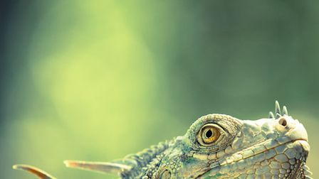 Green dragon, Will Jenkins (UK) / Wildlife Photographer of the Year 2014