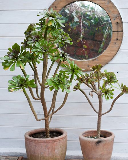 Frost can ruin terracotta pots, so take care to protect yours at this time of year