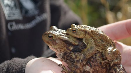 Toads in hand