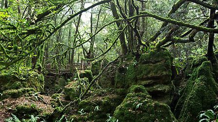 Puzzlewood in the Forest of Dean, featured in Dr Who, Merlin and Atlantis, reopens this February hal