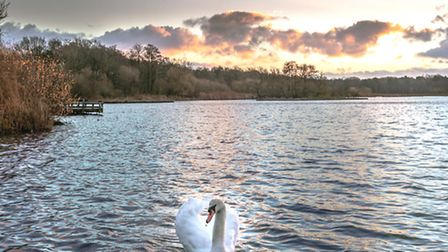 Fleet Pond has gone through a majestic transformation - photo by Liza Toth