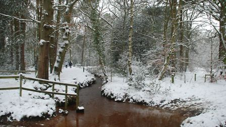 Even in winter the pond offers a beautiful scene - photo by Michelle Salter