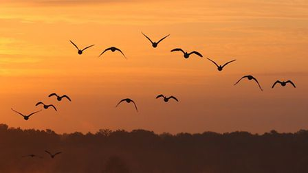 Fleet Pond now attracts birds coming in to roost - photo by Mark Hodson