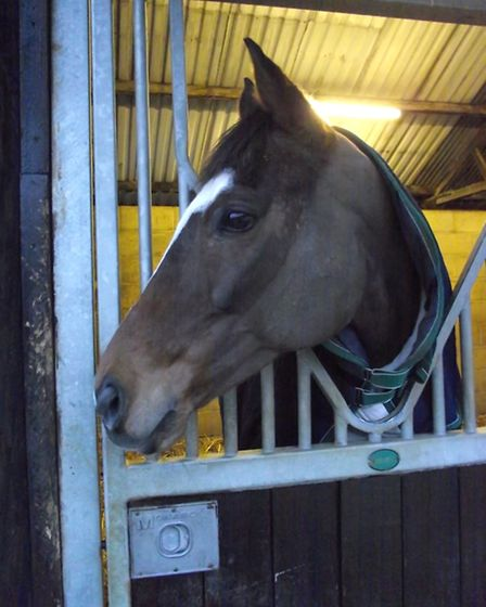 The Giant Bolster at David Bridgwater's stables, near Stow-on-the-Wold
