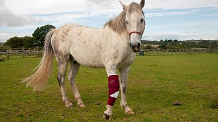 When animals are injured, it's good to know that there are experts on hand to come to the rescue and