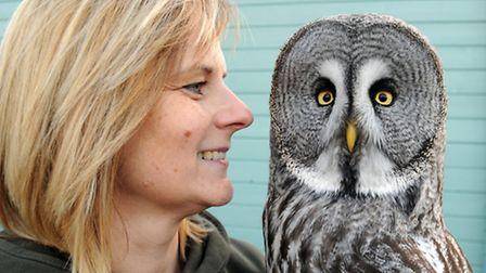 Clare with the beautiful four-year-old Great Grey Owl 'Phoebe' who comes from the Northern Hemispher