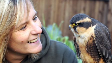Clare with her Aplomado falcon, eight-month-old 'Buzz' from South America