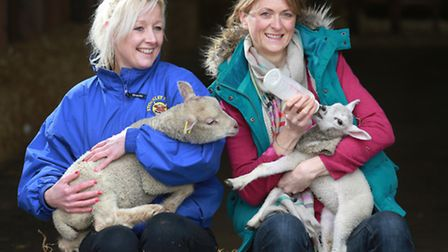 Rachel Burden and administrator, Cat De Sousa with newly arrived spring lambs at Stockley Farm, Arl