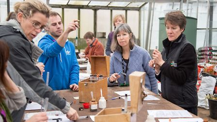 RHS Level II students at Hadlow College's glasshouses