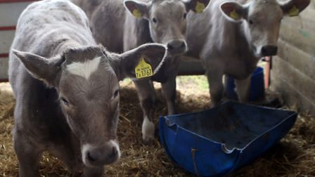 The Parish family farm is entirely a family business, with no hired labour