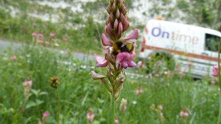 Bees by the roadside