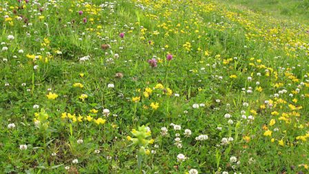 A species-rich grassland in full bloom is a glorious sight. Picture by Lee Schofield