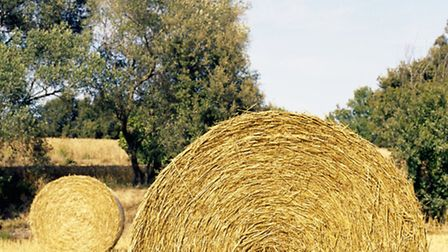 Hay is the most popular word