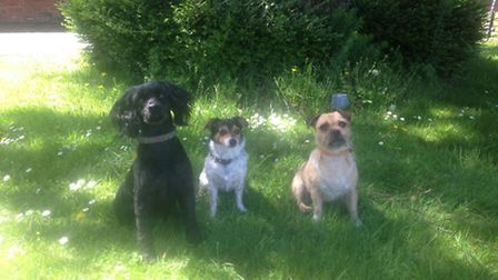 Waiting patiently for the dog show. Left to right: Daisy, Trevor and Pip
