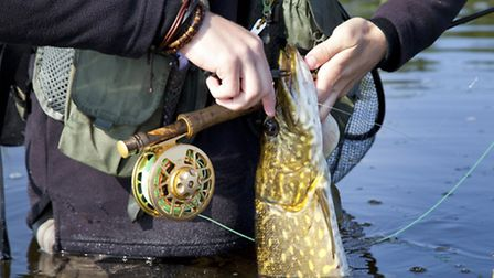 Pike are a feature of the river - fish caught are returned to the water