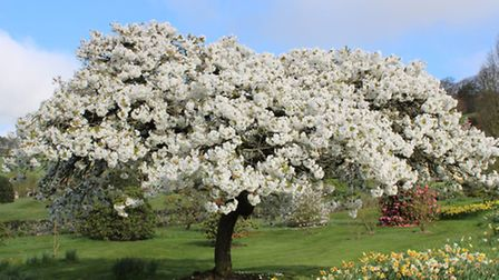 The garden is full of blossom in April