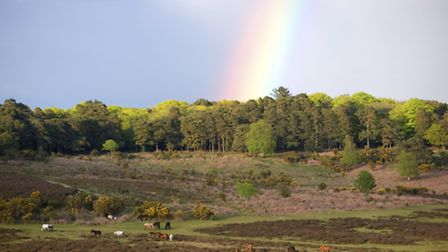 New Forest Ponies Under Rainbow (Getty Images/iStockphoto)