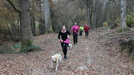 Jenny Lee's canicross fitness class running in the woods at Hawkhurst
