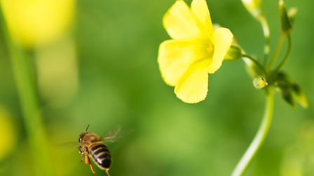 Follow a bee and see where it takes you
