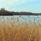 Perfect for a spring stroll, the lake at Virginia Water