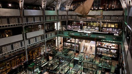 Pitt Rivers Museum, Oxford | Photo credit: Jorge Royan