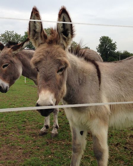 Donkeys often form close friendships with one another | Photo: Island Farm Donkey Sanctuary
