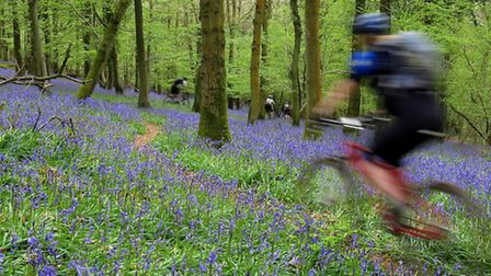 Biking in the Forest of Dean among the bluebells