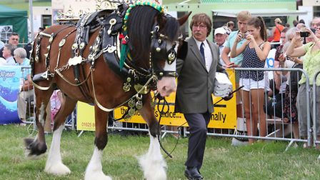 John Wakeling from Willaston, Crewe, with 'Beau' the champion decorated shire