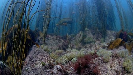 Reef seascape. Picture by Paul Naylor