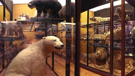 The museum houses the largest collection of natural history specimens by one person