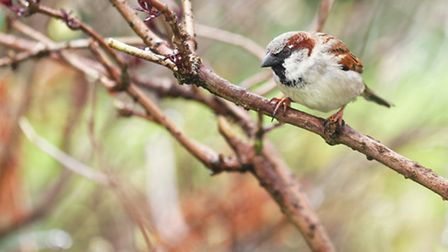 ...if a sparrow farts in a tree, the power goes off.