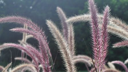 Grasses look stunning back-lit by the low sun