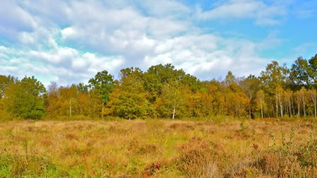 Brede has pockets of open heathland, as well as deciduous and coniferous woods