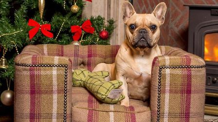 We've found the best gifts for dogs.