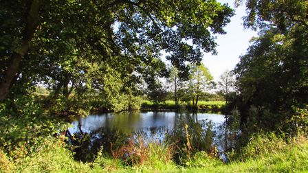 The pond beside the path just before you reach Knutsford Road