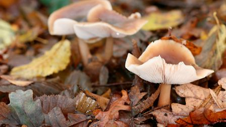 Many species of fungi can be found in the woods