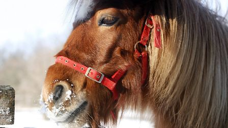 If you're concerned about a horse's welfare, there are plenty of things you can do