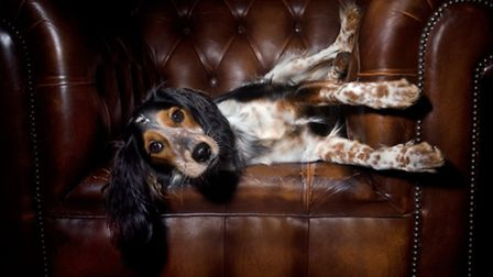 There's nothing better than a cosy pub after a long muddy walk with your four-legged friend.