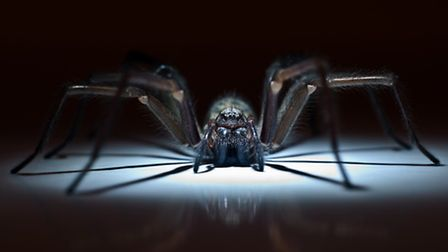 'I am ridiculously, seriously unnerved by spiders'