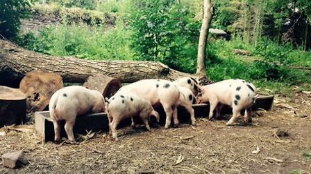 The Salutation has kept its own pure-bred, Gloucestershire Old Spot pigs in a Victorian walled garde
