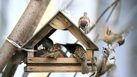 Bird feeders are a vital source of winter fuel but keep them fresh and clean to prevent disease