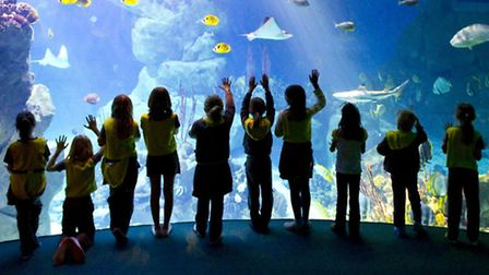 National Marine Aquarium to host Mad About Science event starting on Friday 18 March (1)