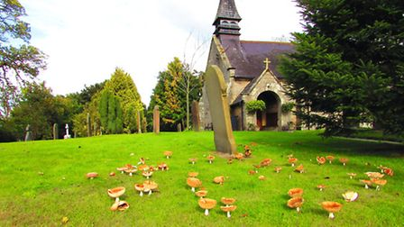 Toadstools thriving in the churchyard of St John the Divine, Burwardsley, Photo by Paul Taylor