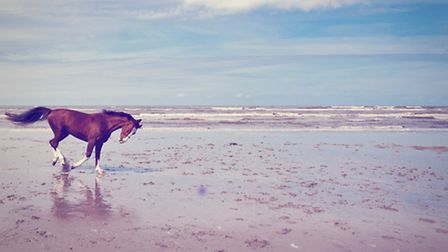 A horse holiday is the perfect opportunity for a ride on the beach