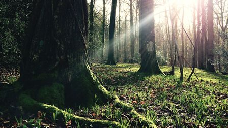 Being among trees has been shown to enhance well-being