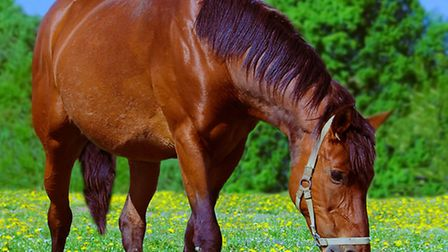 Horse ownership can be a complex business