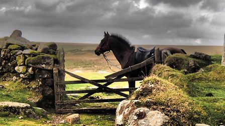 Jane Scott took this photograph at Ditsworthy, where scenes for War Horse were filmed